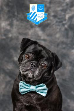 /Images/uploads/DFW Pug Rescue Club/rescuehighdfwpugrescue/entries/6720.jpg