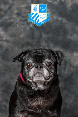 /Images/uploads/DFW Pug Rescue Club/rescuehighdfwpugrescue/entries/6723.jpg
