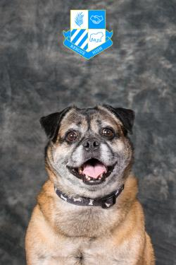 /Images/uploads/DFW Pug Rescue Club/rescuehighdfwpugrescue/entries/6728.jpg