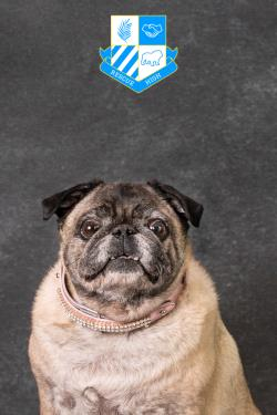 /Images/uploads/DFW Pug Rescue Club/rescuehighdfwpugrescue/entries/6735.jpg
