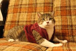 /Images/uploads/Humane Society of Lackawanna County/LoveYourPet/entries/9638.jpg